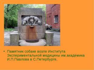 Памятник собаке возле Института Экспериментальной медицины им.академика И.П.П