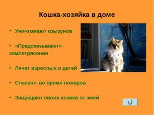 Кошка-хозяйка в доме Уничтожают грызунов «Предсказывают» землетрясения Лечат