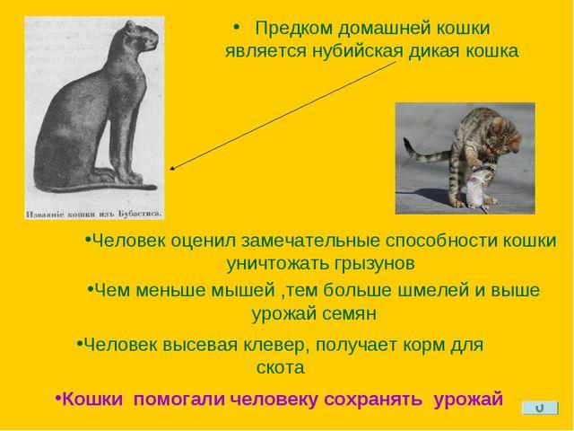 Предком домашней кошки является нубийская дикая кошка Человек оценил замечате...