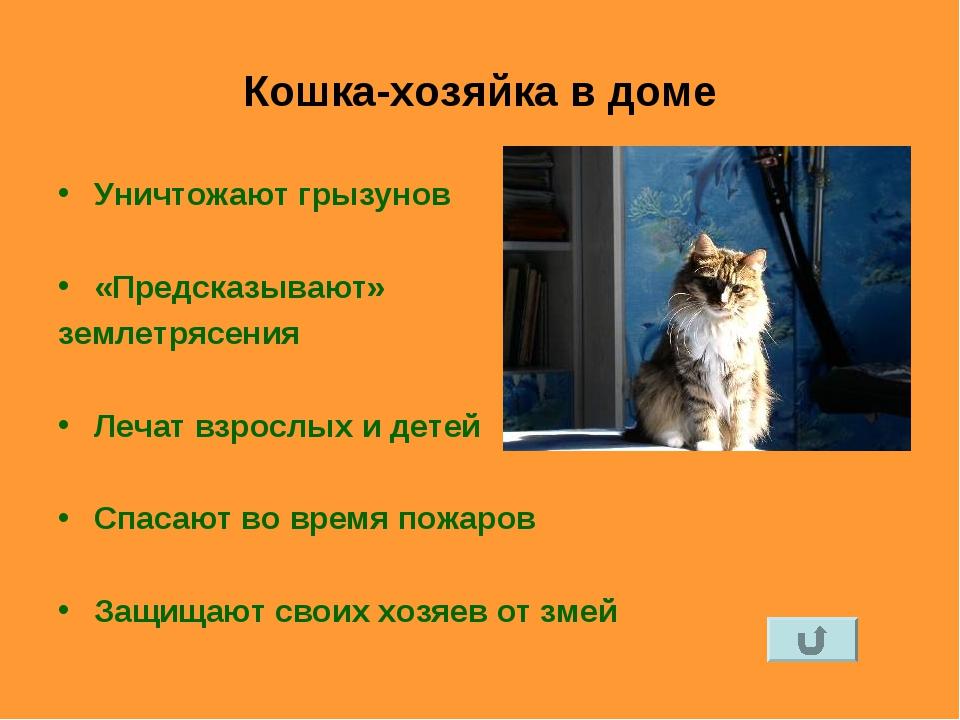 Кошка-хозяйка в доме Уничтожают грызунов «Предсказывают» землетрясения Лечат...