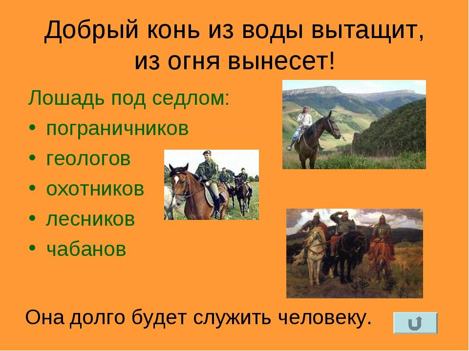 Добрый конь из воды вытащит, из огня вынесет! Лошадь под седлом: пограничнико...