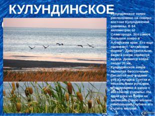 КУЛУНДИНСКОЕ ОЗЕРО Кулундинское озеро расположено на северо-востоке Кулундин