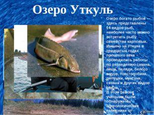 Озеро Уткуль Озеро богато рыбой — здесь представлены 14 видов рыб, наиболее