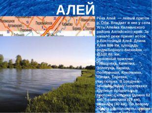 АЛЕЙ Река Алей— левый притокр. Оби. Впадает в нее у села Усть-Алейка Калм