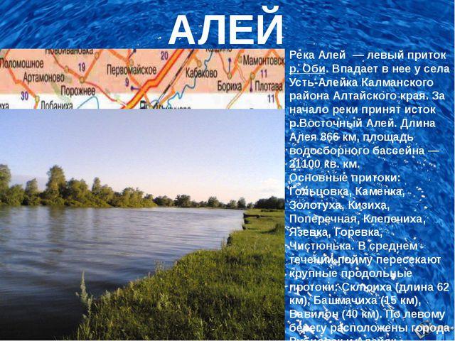 АЛЕЙ Река Алей— левый притокр. Оби. Впадает в нее у села Усть-Алейка Калм...