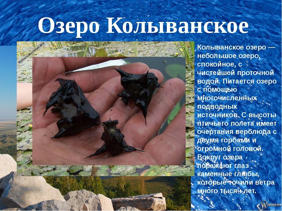 Озеро Колыванское Колыванское озеро — небольшое озеро, спокойное, с чистейше...