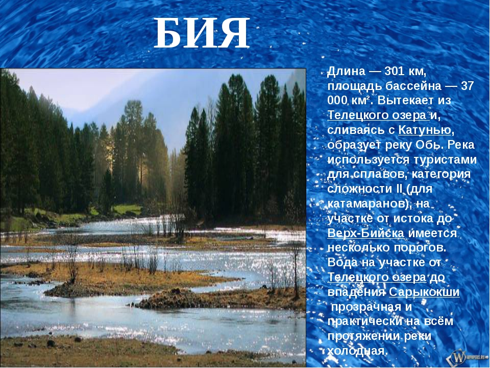 БИЯ Длина — 301 км, площадь бассейна — 37 000 км². Вытекает изТелецкого озе...