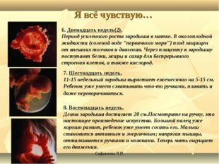 Сафьянова Л.П. Я всё чувствую… 6. Двенадцать недель(2). Период усиленного рос