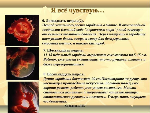 Сафьянова Л.П. Я всё чувствую… 6. Двенадцать недель(2). Период усиленного рос...