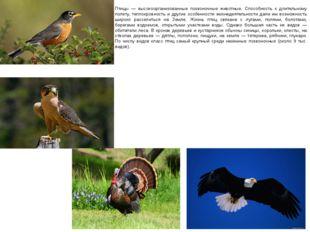Птицы — высокоорганизованные позвоночные животные. Способность к длительному