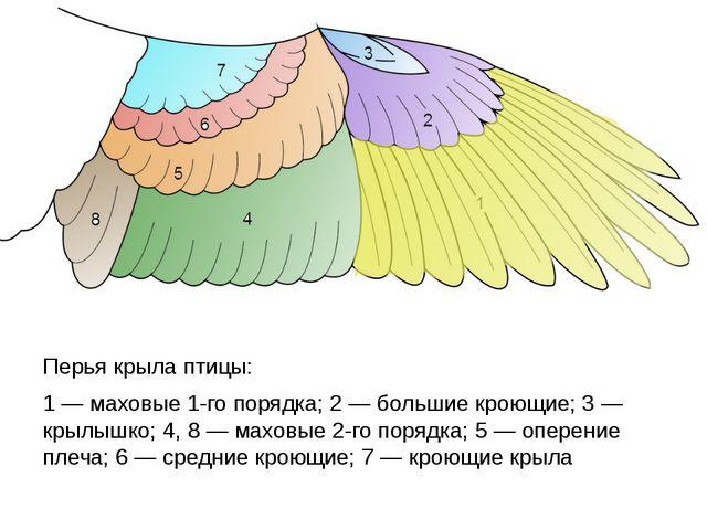 Перья крыла птицы: 1— маховые 1-го порядка; 2— большие кроющие; 3— крылышк...