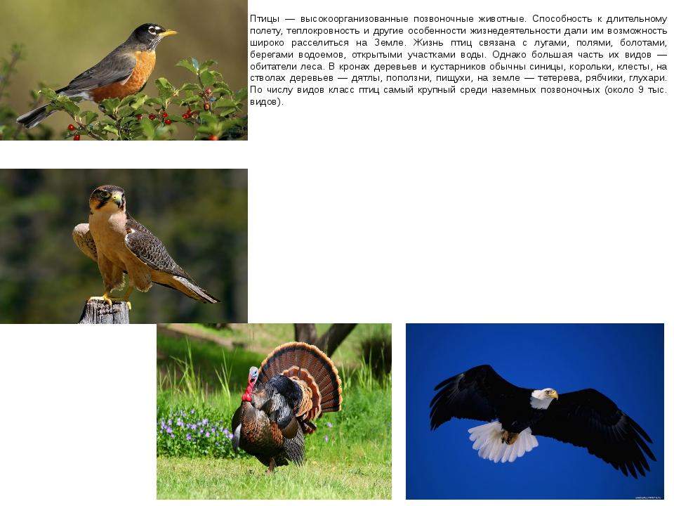Птицы — высокоорганизованные позвоночные животные. Способность к длительному...