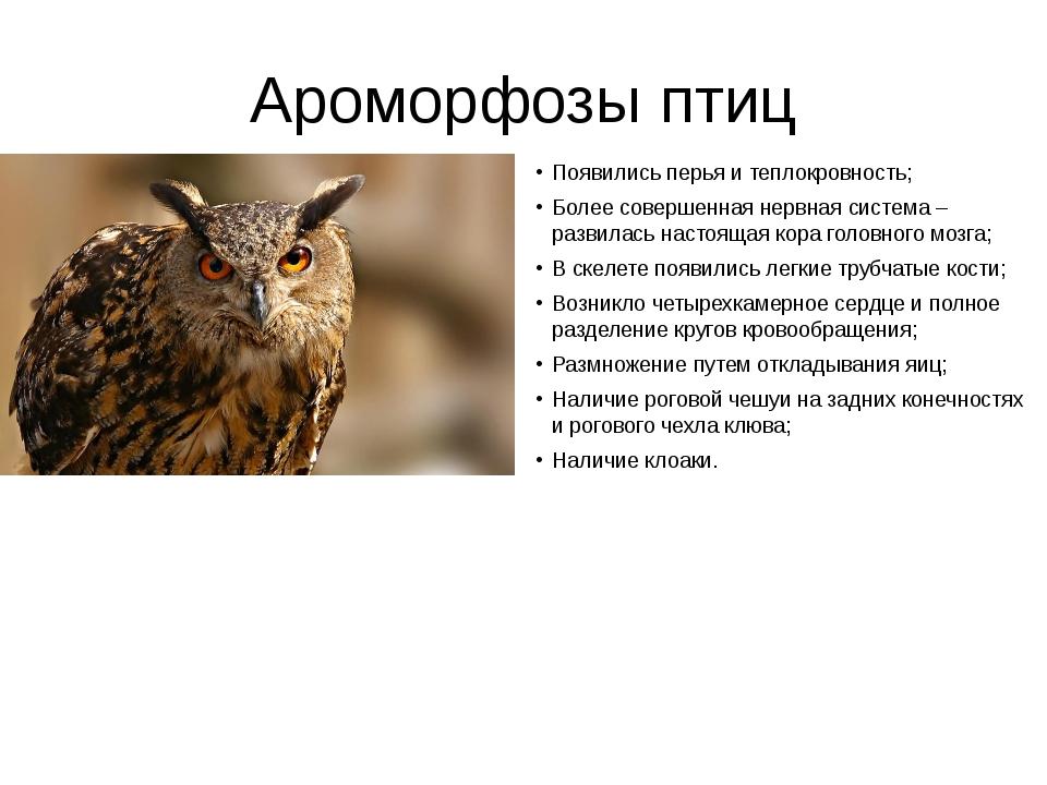 Ароморфозы птиц Появились перья и теплокровность; Более совершенная нервная с...