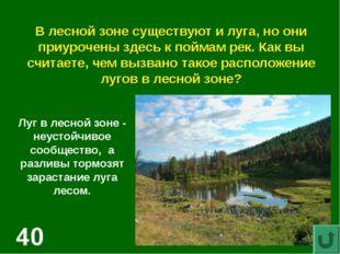 В лесной зоне существуют и луга, но они приурочены здесь к поймам рек. Как вы