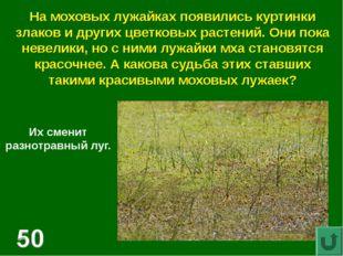 На моховых лужайках появились куртинки злаков и других цветковых растений. Он