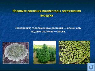 Назовите растения-индикаторы загрязнения воздуха Лишайники; голосеменные раст