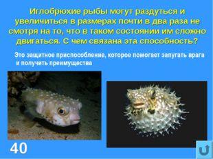 Иглобрюхие рыбы могут раздуться и увеличиться в размерах почти в два раза не