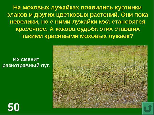 На моховых лужайках появились куртинки злаков и других цветковых растений. Он...