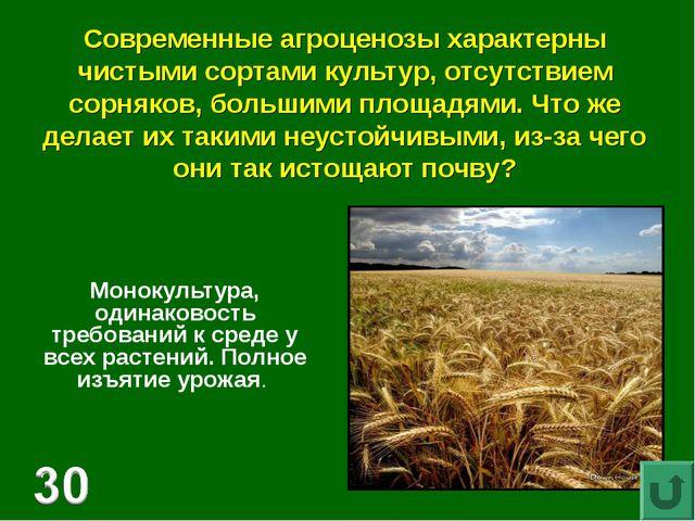 Современные агроценозы характерны чистыми сортами культур, отсутствием сорняк...