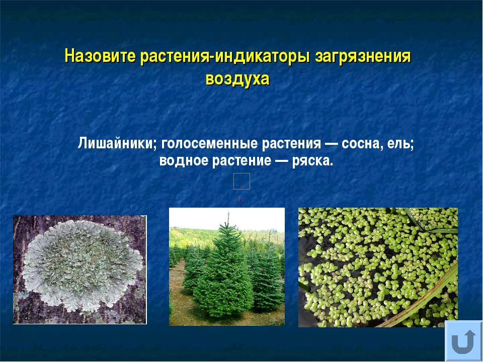 Назовите растения-индикаторы загрязнения воздуха Лишайники; голосеменные раст...