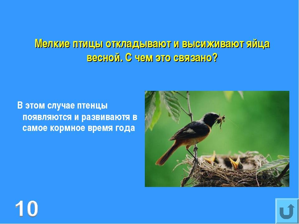 Мелкие птицы откладывают и высиживают яйца весной. С чем это связано? В этом...