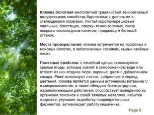 Клюква болотная многолетний травянистый вечнозеленый полукустарник семейства