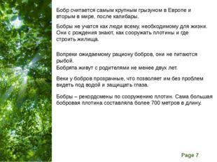 Бобр считается самым крупным грызуном в Европе и вторым в мире, после капибар
