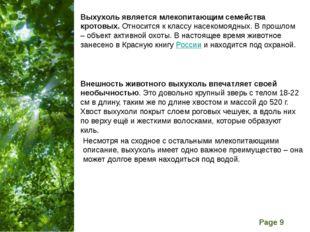 Выхухоль является млекопитающим семейства кротовых. Относится к классу насеко