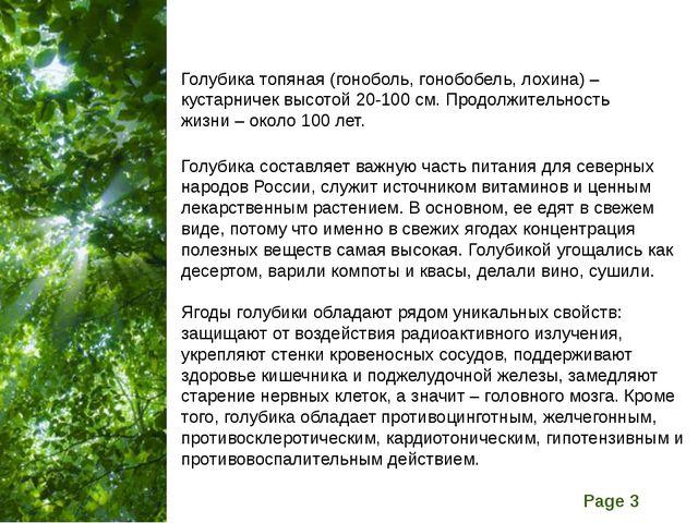 Голубика топяная (гоноболь, гонобобель, лохина) – кустарничек высотой 20-100...