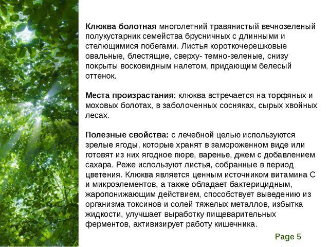 Клюква болотная многолетний травянистый вечнозеленый полукустарник семейства...