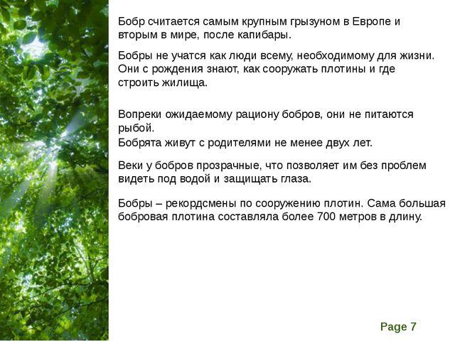 Бобр считается самым крупным грызуном в Европе и вторым в мире, после капибар...