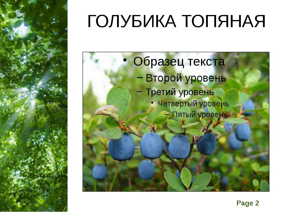 ГОЛУБИКА ТОПЯНАЯ Free Powerpoint Templates Page