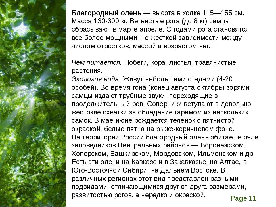 Благородный олень — высота в холке 115—155 см. Масса 130-300 кг. Ветвистые ро...