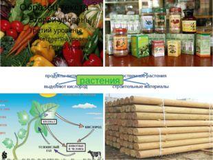 продукты питания лекарственные растения выделяют кислород строительные матери