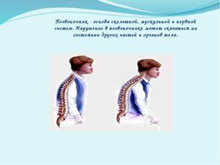 Позвоночник - основа скелетной, мускульной и нервной систем. Нарушение в позв