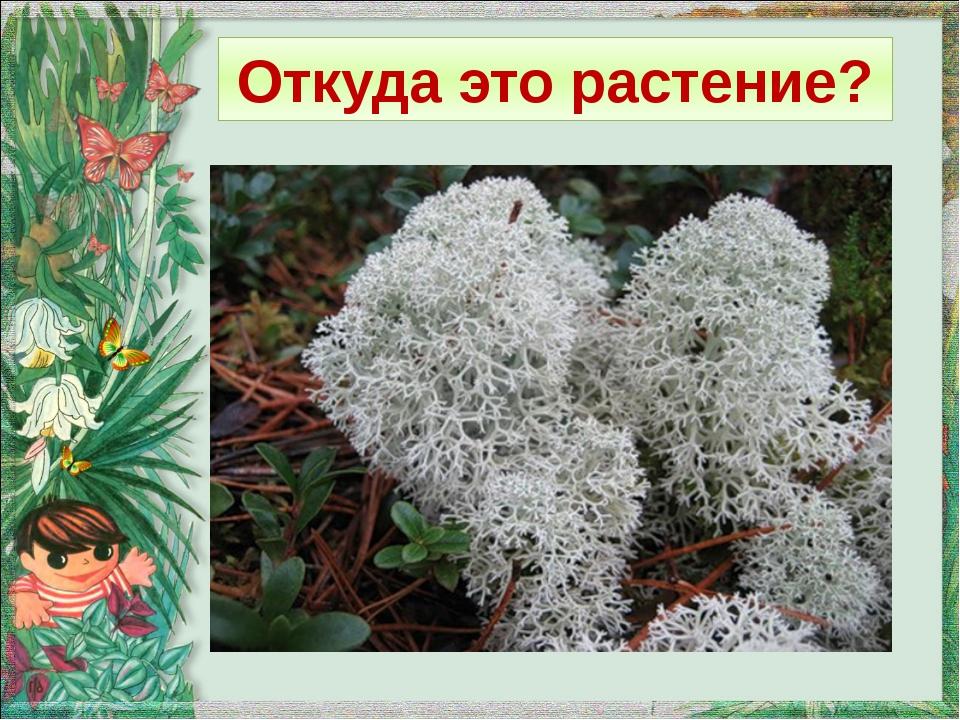 Откуда это растение?