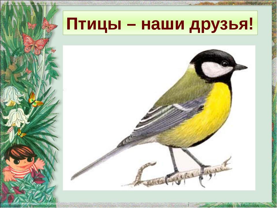 Птицы – наши друзья!