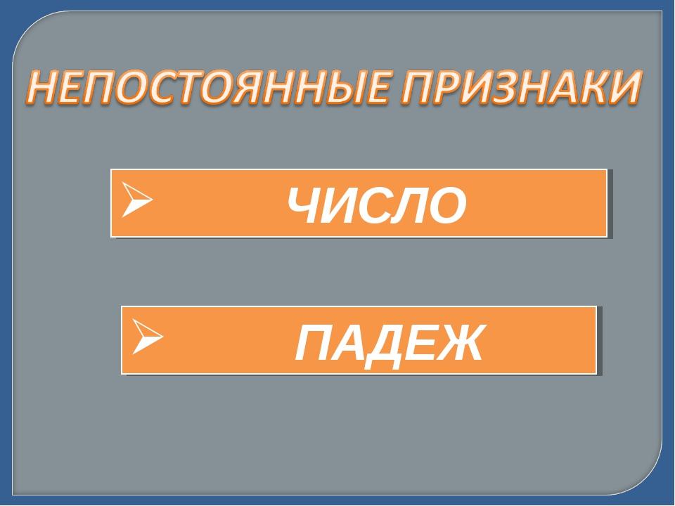 ЧИСЛО ПАДЕЖ