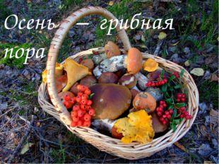 Осень – грибная пора