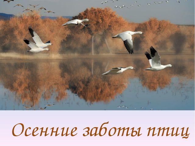 Осенние заботы птиц