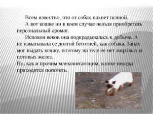 Всем известно, что от собак пахнет псиной. А вот кошке ни в коем случае нель