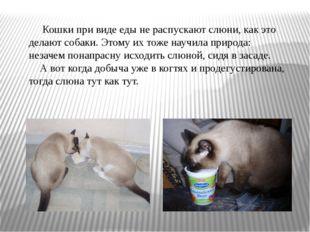 Кошки при виде еды не распускают слюни, как это делают собаки. Этому их тоже