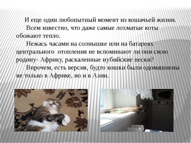 И еще один любопытный момент из кошачьей жизни. Всем известно, что даже самы...
