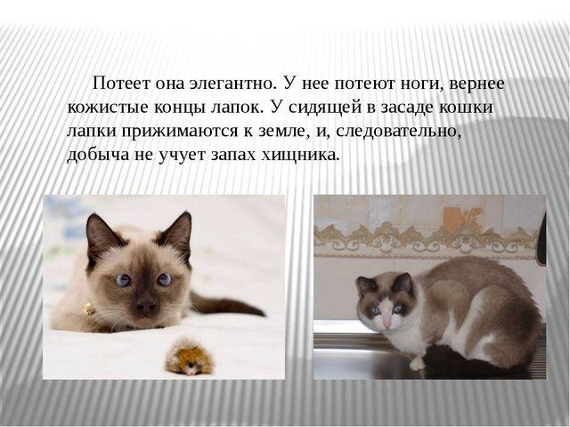 Презентация Реферат на тему Охотничий арсенал кошки  Потеет она элегантно У нее потеют ноги вернее кожистые концы лапок У сидя