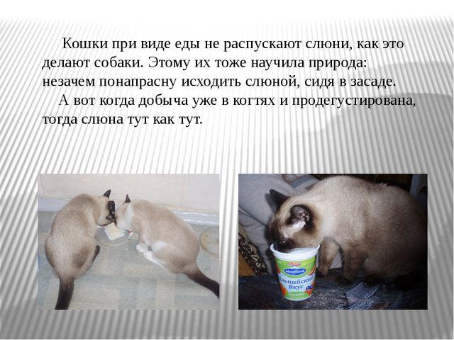 Презентация Реферат на тему Охотничий арсенал кошки  Кошки при виде еды не распускают слюни как это делают собаки Этому их тоже