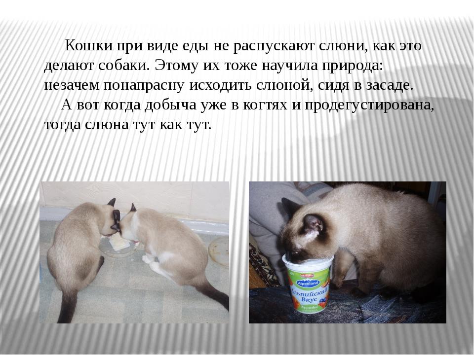 Кошки при виде еды не распускают слюни, как это делают собаки. Этому их тоже...
