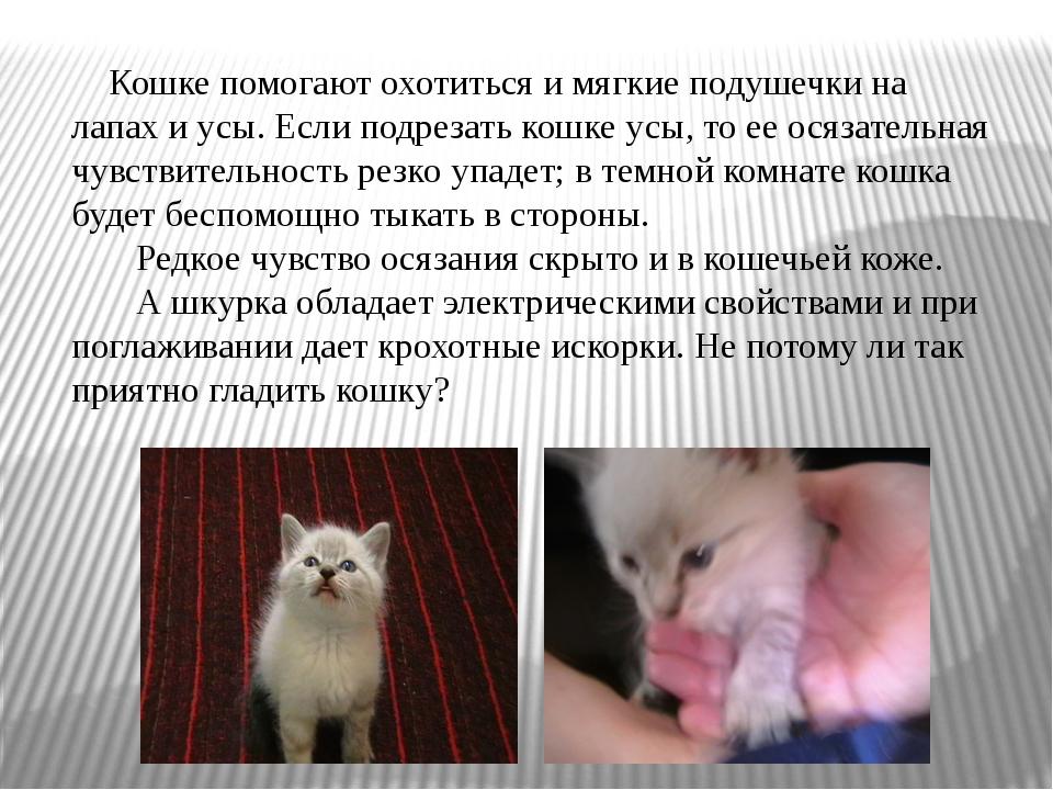 Кошке помогают охотиться и мягкие подушечки на лапах и усы. Если подрезать к...