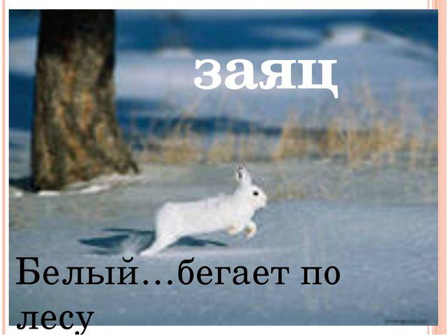 Белый…бегает по лесу заяц