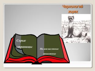 Черноногий хорек Серые страницы Малоизвестные животные