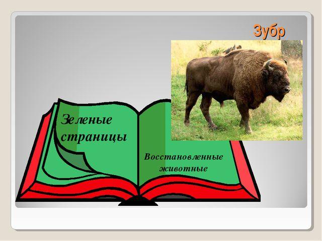 Зубр Зеленые страницы Восстановленные животные